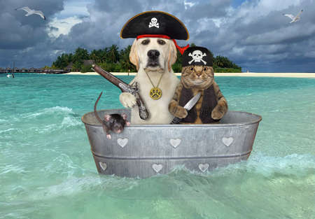 A cat, a dog and a rat are pirates in a washtub. They are drifting near a beach of a tropical island.