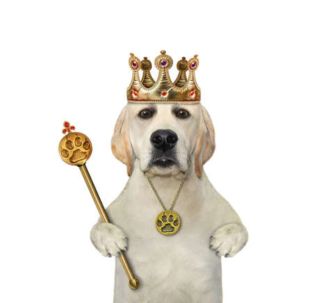 A dog in a crown is holding a gold royal scepter. White background. Isolated.
