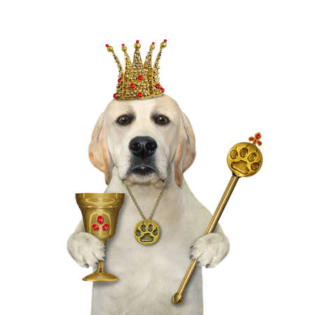 A dog in a gold crown is holding a goblet with rubies and a royal scepter. White background. Isolated.
