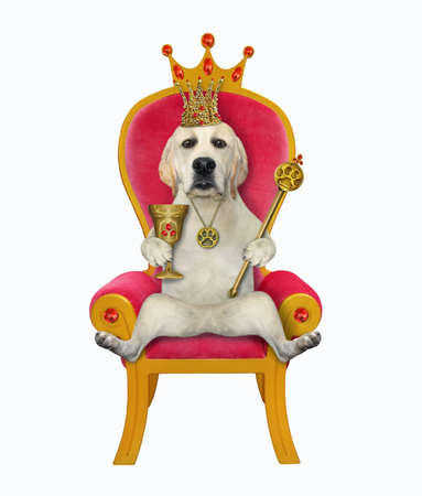 A dog in a gold crown is holding a goblet with rubies and a royal scepter on a red throne. White background. Isolated.