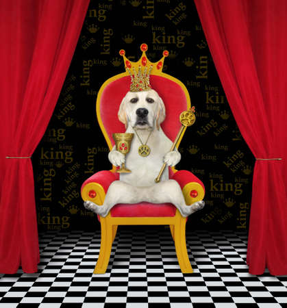 A dog in a gold crown is holding a goblet with rubies and a royal scepter on a red throne.