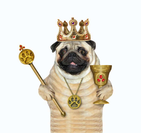 A pug dog in a crown is holding a gold royal scepter and a goblet. White background. Isolated.