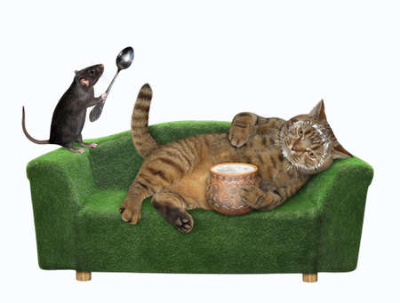 A beige lazy cat is lying on a green divan and eating sour cream from a clay pot. White background. Isolated.