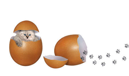A kitten is inside a brown egg. White background. Isolated. Stock Photo