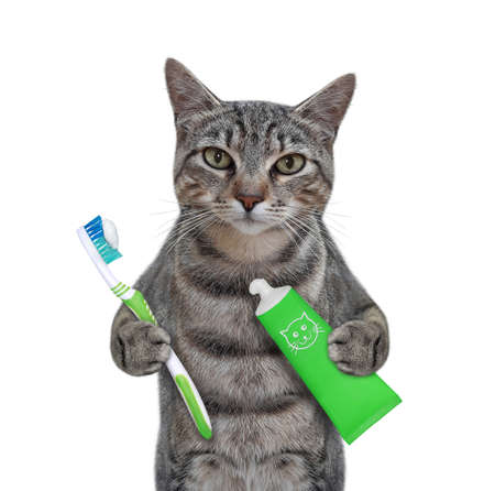 A gray cat with a toothbrush and a tube of toothpaste is brushing his teeth. White background. Isolated.