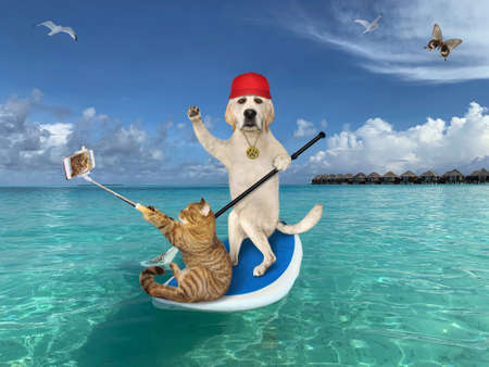 A dog with a cat are on a stand up paddle board in the Maldives. The cat takes selfie.