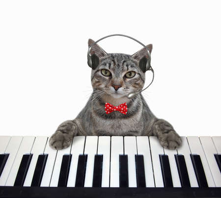 A gray cat musician in headphones plays the piano. White background. Isolated.