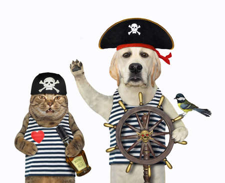 A dog wit a cat in pirate uniform are at a helm of a ship. White background. Isolated.