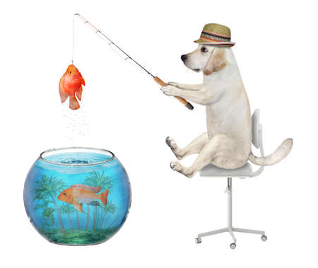 A dog in a straw hat is fishing from an aquarium ball. He caught a gold fish. White background. Isolated.
