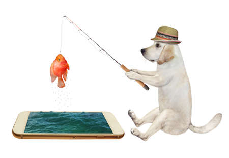 A dog in a straw hat is fishing from a phone. He caught a gold fish. White background. Isolated.