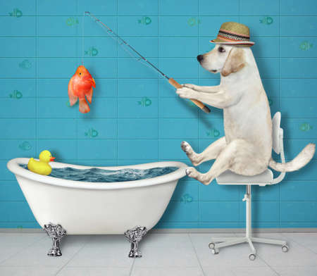 A dog in a straw hat is fishing in a bathroom. He caught a gold fish.