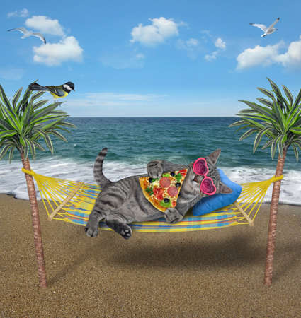 A gray cat in sunglasses is lying in a hammock between palm trees and eating a slice of pizza on the seashore.