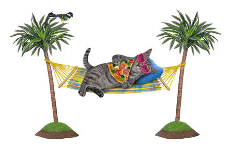 A gray cat in sunglasses is lying in a hammock between palm trees and eating a slice of pizza. White background. Isolated. Banco de Imagens