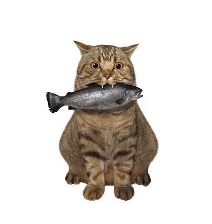 A beige cat is sitting with a big fish in its mouth. White background. Isolated.