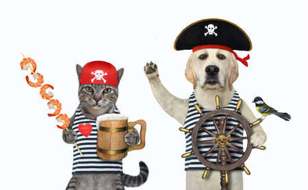 A gray cat and a dog labrador in pirate uniform drink beer with shrimp a wooden skewer. White background. Isolated.