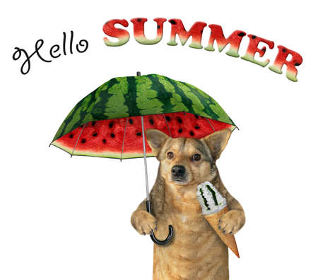 The dog with a ice cream cone is under a watermelon umbrella. Hello summer. White background. Isolated.