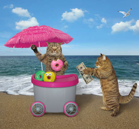 The funny cat buys donuts at the mini movable pink cart on the beach.