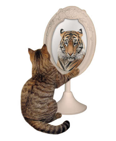 The funny cat views his reflection in the mirror. This is a tigre. White background.