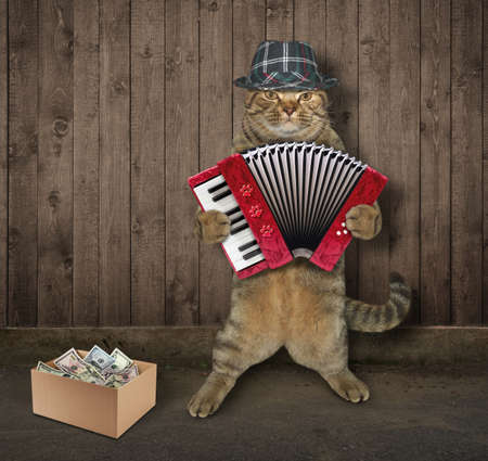The cat in hat is playing the accordion next to a wooden fence. Фото со стока