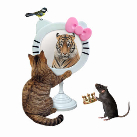 A beige cat looks in a funny round mirror. He sees a tiger there. A rat gives a crown to him. White background. Isolated.