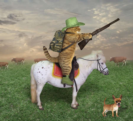 The cat cowboy with a rifle rides a horse on the ranch. His dog is next to him. Reklamní fotografie