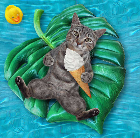 A gray cat with a cone of ice cream is lying on an inflatable green leaf in a swimming pool at the resort.