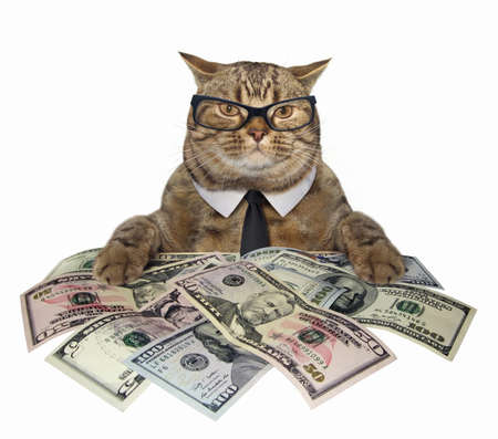 The smart cat in a tie and glasses holds american dollars. White background.