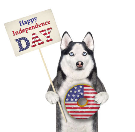 A dog husky patriot is holding a usa donut and a poster that says happy independence day. White background. Isolated.