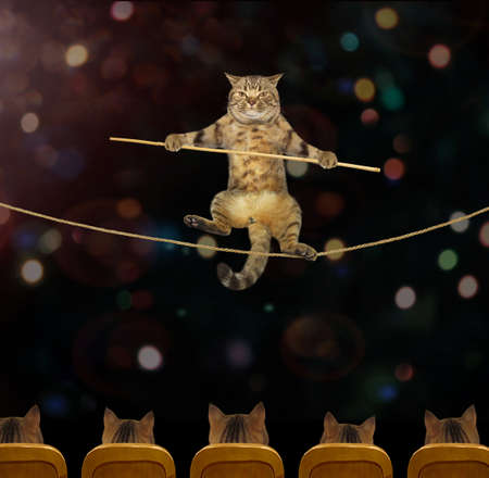 The cat acrobat goes on a tightrope in the circus. Stock fotó