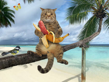 A beige cat with a banana sausage is sitting on a fallen palm tree in a beach of Maldives over the sea water.