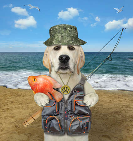 A dog labrador fisher with a rod caught a gold fish on a beach of the sea.
