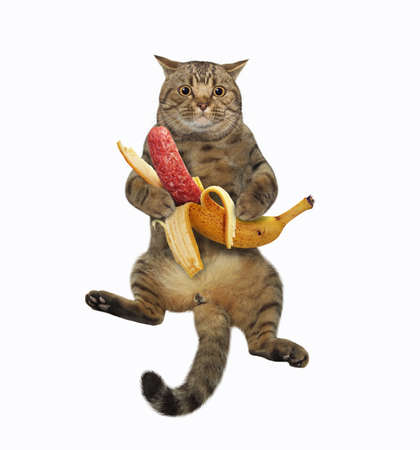 A beige cat is sitting and holding a banana sausage. White background. Isolated.