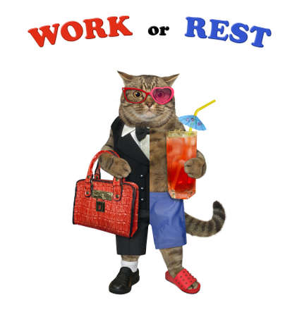 One half of a beige cat dressed in a suit holds a briefcase and the other half dressed in shorts holds juice. White background. Isolated.