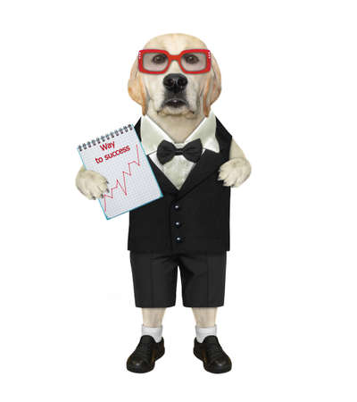 A dog labrador businessman dressed in a suit holds a notepad with a chart. Way to success. White background. Isolated.