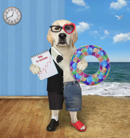 One half of a dog labrador in a suit holds a notepad with a chart and the other half in shorts holds a inflatable ring. Stock Photo