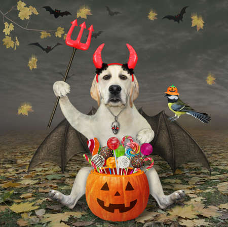 A dog labrador with bat wings and devil horns holds a pumpkin bucket with candies a trident in the autumn forest for Halloween. Stock Photo