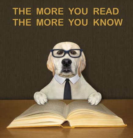 An intelligent dog labrador in a black tie and glasses reads an open book at the desk. Stock Photo