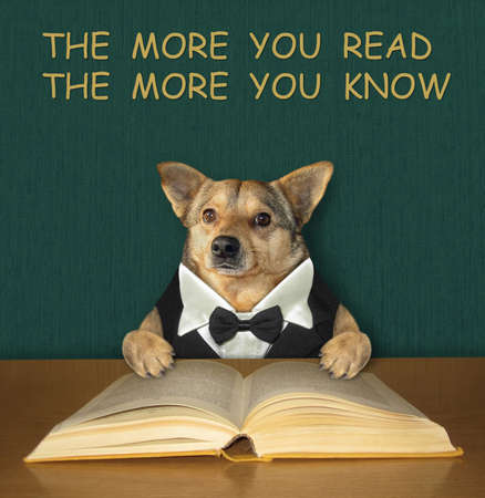 A beige intelligent dog in a bow tie reads an open book at the desk. Stock Photo