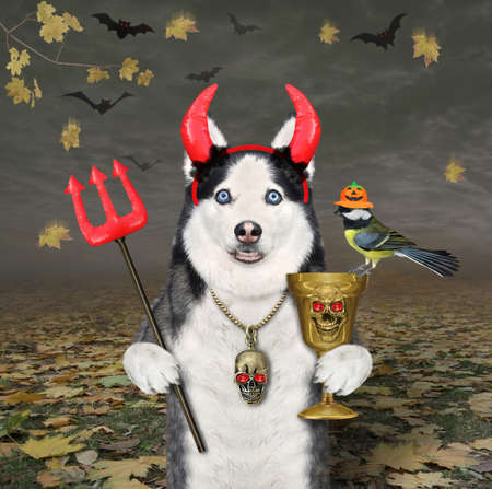 A dog husky in devil horns holds a gold goblet and a trident in the autumn forest for Halloween. Stock Photo