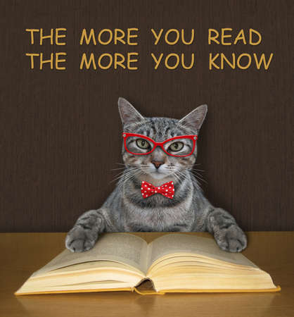 A gray intelligent cat in a bow tie and glasses reads an open book at the desk. Stock Photo