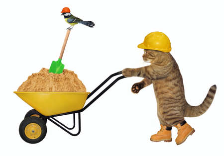 A beige cat builder in a construction helmet pushes a wheel barrow full of sand. White background. Isolated. Stock Photo