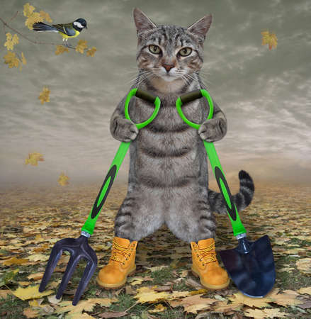 A gray cat gardener in boots holds a shovel and a garden pitchfork in the autumn park. Stock Photo