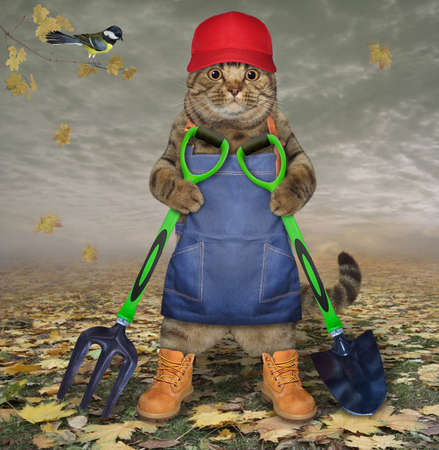 A beige cat gardener in a blue apron and boots holds a shovel and a garden pitchfork in the autumn park.