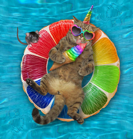 A beige caticorn in sunglasses with a cone of ice cream is lying on an inflatable fruit in a swimming pool at the resort. Stock Photo