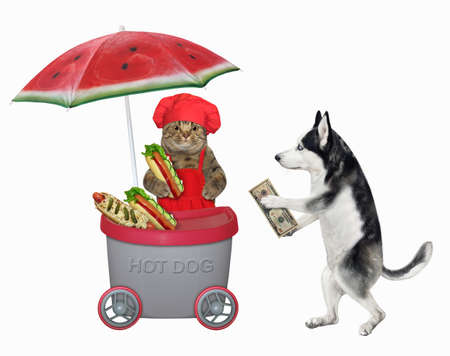 A dog husky buys a hot dog in a gray mini movable kiosk. White background. Isolated.