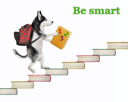A dog husky with a backpack and a textbook is going up the stairs made of books. Be smart. White background. Isolated. Stock Photo