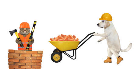 A dog labrador builder in a construction helmet pushes a wheel barrow full of red bricks. White background. Isolated.