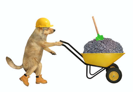 A beige dog builder in a construction helmet pushes a wheel barrow full of crushed stone. White background. Isolated.