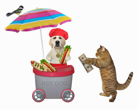 A beige cat buys a hot dog in a gray mini movable kiosk. White background. Isolated.