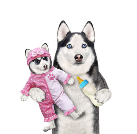A dog husky holds its puppy dressed in a pink bodysuit baby and feeds it with milk. White background. Isolated.